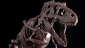 """【開発ブログ更新!!】  太古の記憶から紡がれる""""肉食恐竜の王"""" Imaginary Skeleton ティラノサウルスのご紹介‼"""